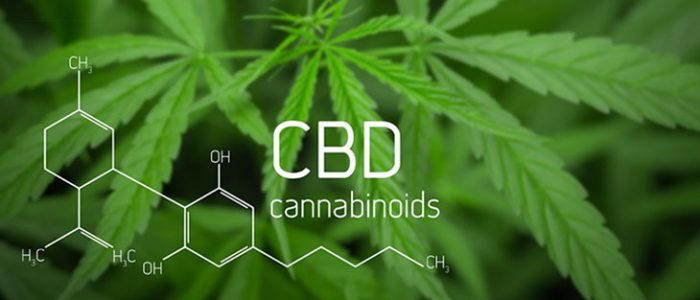 Best CBD Products for Beauty in 2020
