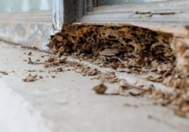 Get Rid Of Ants From Your Home