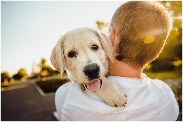 8 Easy Tips to Keeping Your Pup Happy and Healthy