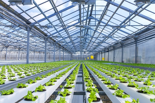 Hydroponics – What Exactly Is It?